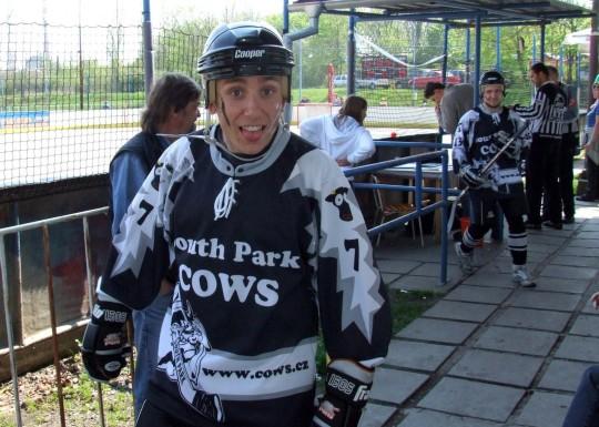Cows - Litoměřice